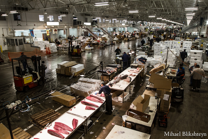 The new fulton fish market at hunts point the bronx for Fulton fish market online