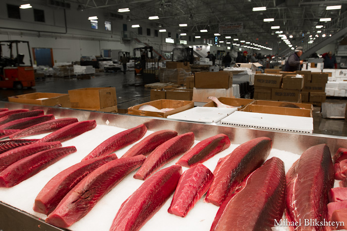 The new fulton fish market at hunts point the bronx for Fulton fish market