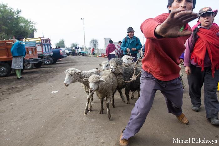 Saquisili Thursday Animal Market